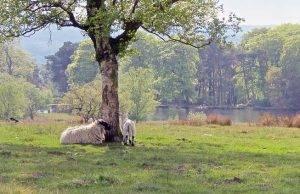 Perierga.gr - Δάσος με 50 εκ. δέντρα αναδημιουργούν οι Βρετανοί