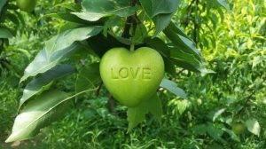 Φρούτα με περίεργο σχήμα - Πώς γίνονται