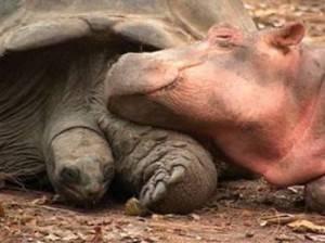 Ασυνήθιστη φιλία μεταξύ ζώων
